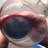 Wijn – Wijn maken